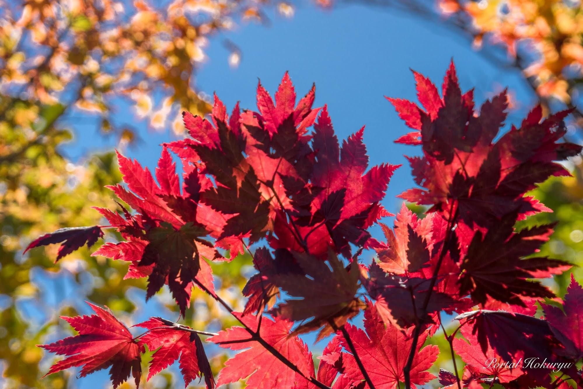 紅葉を愛でる季節