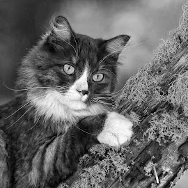 Cat Claws and Moss by Twin Wranglers Baker - Black & White Animals ( cat, climbing tree, moss, feline,  )