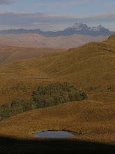 Photo: Puna and a Nevado