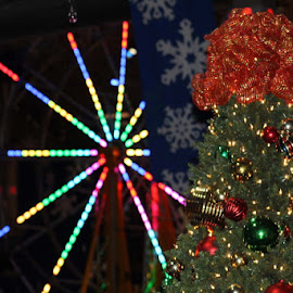 Christmas Colors by Don Cailler - Public Holidays Christmas ( balls, tree, colors, christmas, ornaments,  )