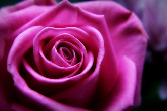 Photo: Soft, soft, soft - another 'romantic' rose for #FlowerFriday :)