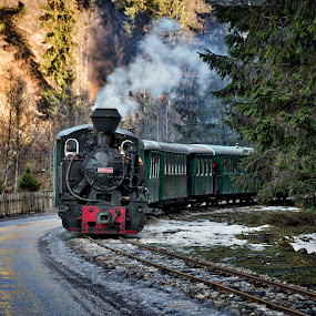 Running in the forest by Pascal Hubert - Transportation Trains