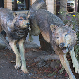 Wolves in the Street by Terese Hale - Artistic Objects Still Life ( bronze, street art, wildlife, wolves, scluptures )