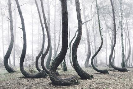 Crooked Forest, misteriosa floresta da Polônia
