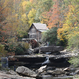 Fall Beckett State Park Water Grain Mill by Shelby Dennis - Landscapes Travel ( fall colors, west virginia, waterfall, state park, water wheel )