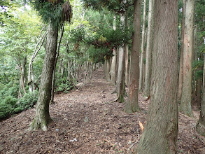 植林との境を進む