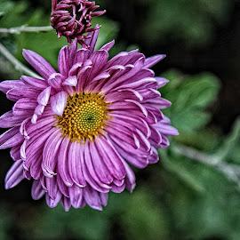 CP flower 08 by Michael Moore - Flowers Single Flower