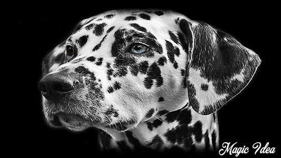 Dalmatian Wallpaper Apper Pa Google Play