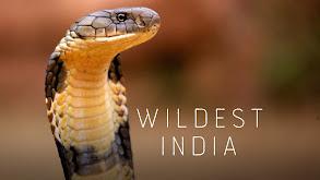 Wildest India thumbnail