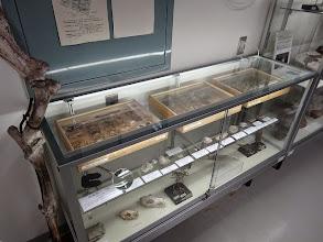 写真: 昆虫標本、化石標本