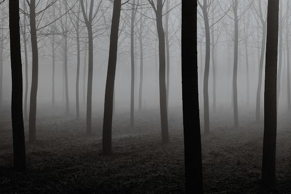 Alba nel boschetto