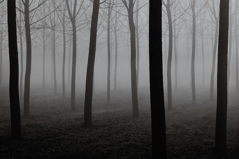Alba nel boschetto di Francescogiacomo