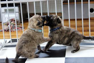 Photo: spelen (Max en d.blauw)