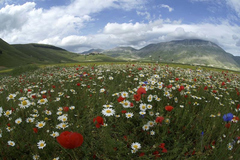 la valle fiorita di bruno.mezzadri