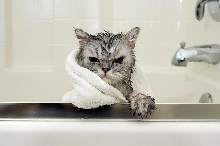 21 Hilarious Photos of Cats in Baths