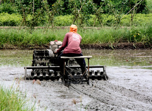 Photo: Day 327 - Preparing a Rice Field for Planting