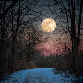 Wolf Moon Winter Path by Jim Crotty - Landscapes Forests ( ohio landscape photography, sugarcreek, wolf moon, moon, winter, mystical, trail, lunar, evening, moonrise,  )
