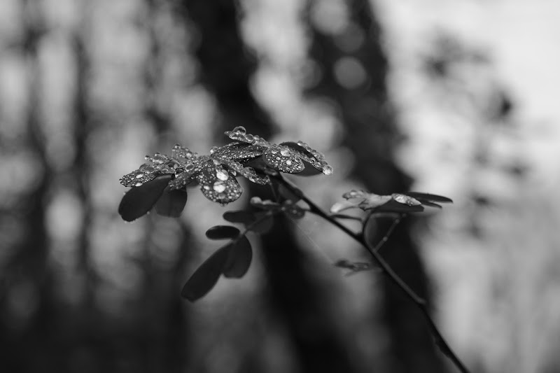 Crying Leaf di Laura Francesca Basile