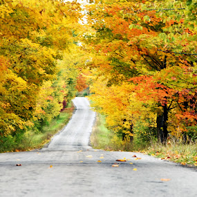 Autumn in NY by Andy Bigelow - Landscapes Forests ( #nature, #autumn, #backroad, #leaves, #fall )