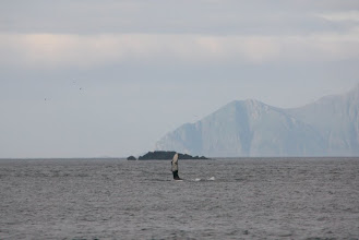 Photo: another whale, side of this fin....