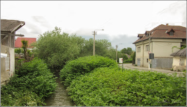 Photo: Iulişca (Fallopia japonica) planta invaziva, din Turda, Vedere de pe pod, Str. Bicazului - 2019.05.20