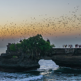 Bird Flock by Loh Jiann - Landscapes Caves & Formations ( bird, sunset, sea, ocean, tanah lot,  )