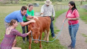 Aqua Cow thumbnail