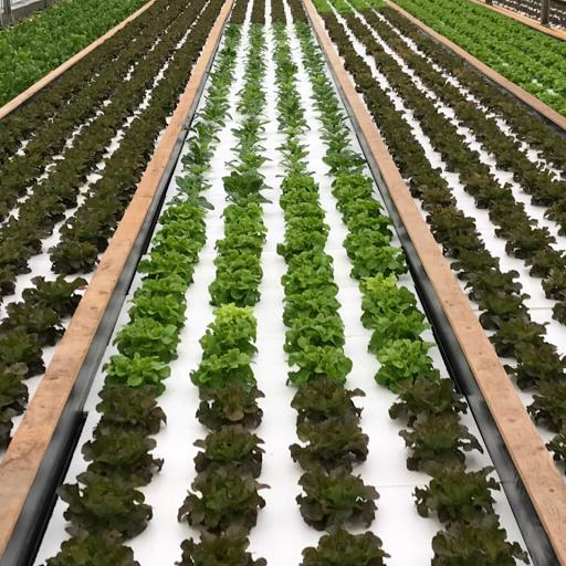 plants hors sol en aquaponie
