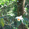 Orquídea del bosque