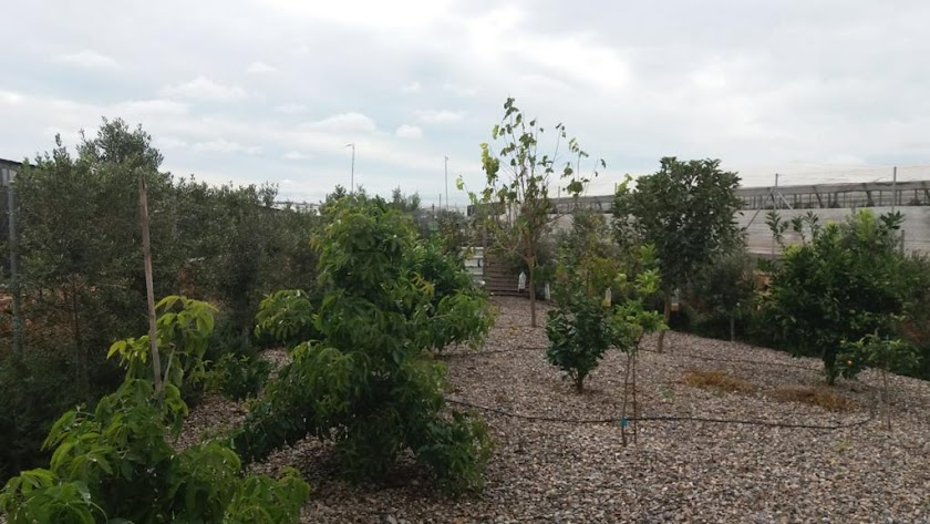 Reservorio de plantas ubicado junto a un invernadero en el municipio de El Ejido.
