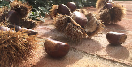 Photo: Chestnuts