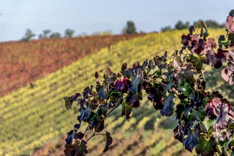 Settembre di Vino di Nefti-Monica