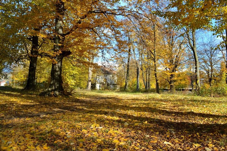 autumn by Iulia Radu - Nature Up Close Trees & Bushes ( fall colors, autumn, colors, fall, trees, leaves, fallen leaves,  )