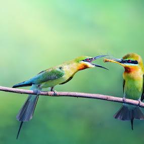 Blue-tailed Bee-eater II by Sasi- Smit - Animals Birds