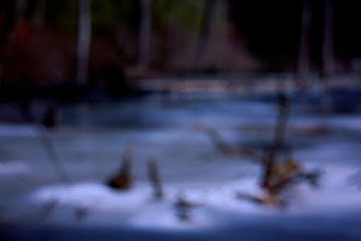Photo: Swamp Bokeh Something a little different for my #365Project curated by the most awesome +Simon Kitcher