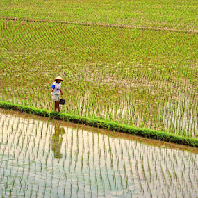 by Ayah Adit Qunyit - Professional People Agricultural Workers ( best photo 2013,  )