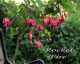Photo: Rocket Fire