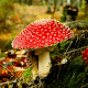 Mushrooms HD Wallpaper Background for PC-Windows 7,8,10 and Mac