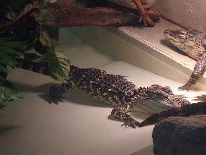 Photo: alligators
