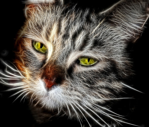 Lily by Angel Weller - Animals - Cats Portraits ( cat, bright, fur, edit.eyes )