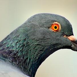 by Francois Wolfaardt - Animals Birds