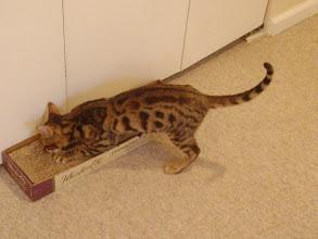 Photo: I think I smell catnip in the cat scratcher.