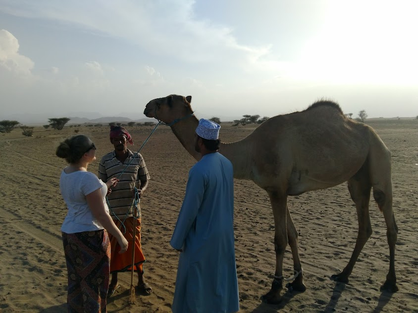 meeting camels in the omani desert