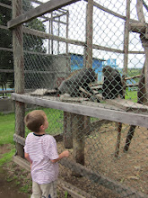 Photo: We wonen naast een klein dierentuintje. Een zeldzaamheid in Tanzania.