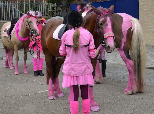 cavalli in rosa di walterferretti