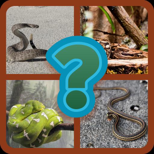 Snake Quiz