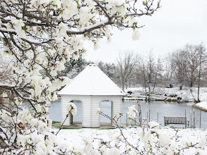 Photo: White magnolias under white snow in front of a white gazebo on a pond at Cox Arboretum in Dayton, Ohio.