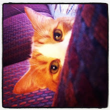 Photo: Hide & seek! Here I am! #intercer #cat #pet #cats #pets #meow #beautiful #cute #cutie #animal #picpets #sweet #kitty #kitten #catlovers #pretty #funny #paw #paws #ears #fur #catsofinstagram #eyes #nose #catstagram #hide - via Instagram, http://instagr.am/p/O5ITxHJftT/