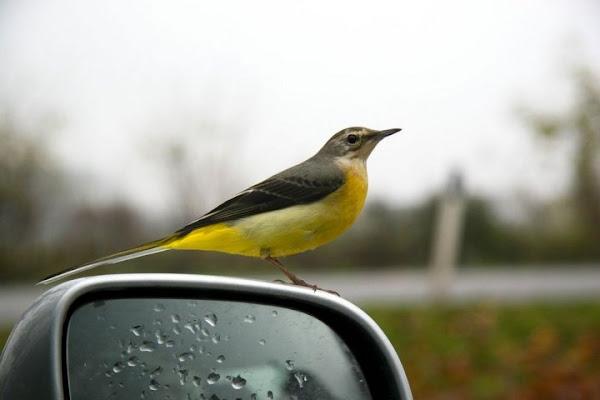 Uccellino curioso di daniele.semenzato