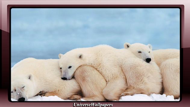 Polar Bear Wallpaper Apk Latest Version Download Free